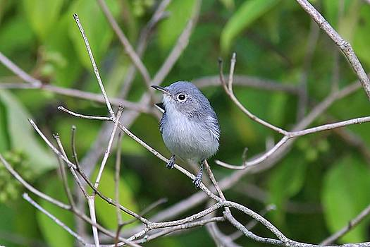 Blue-gray and green by Linda Crockett