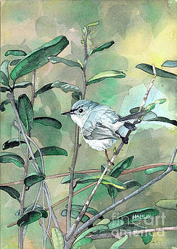 Blue-gray Gnatcatcher by Steve Hamlin