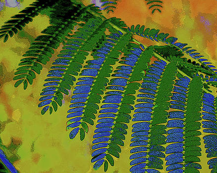 Blue-Green Fronds by Tracy Daniels