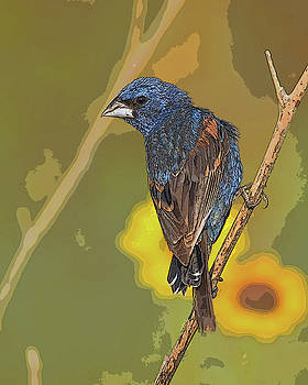 Blue Grosbeak and Sunflowers by Pamela Rose Hawken