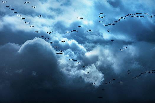 Blue Heaven by Debi Bishop