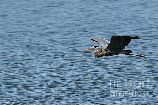 Blue Heron # 1 by Geraldine DeBoer