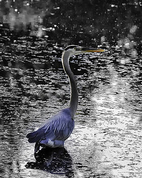 Blue Heron 2008 by Joseph Duba