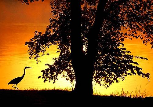 Sumoflam Photography - Blue Heron at Sunrise