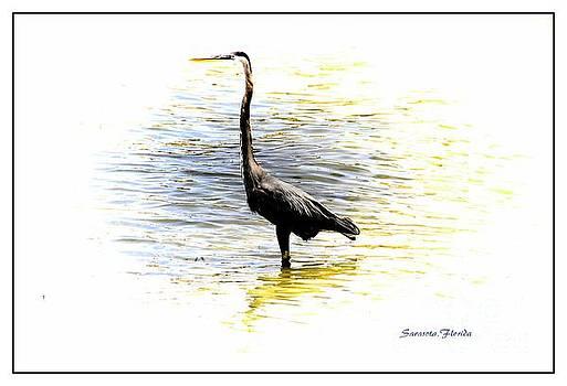 Blue Heron by Athala Carole Bruckner