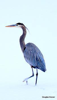 Blue Heron by Doug Hoover