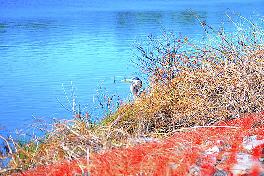 Blue Heron in hiding by Marilyn Holkham