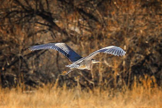 Blue Heron by Juli Ellen