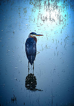 Blue Heron by Loni Collins