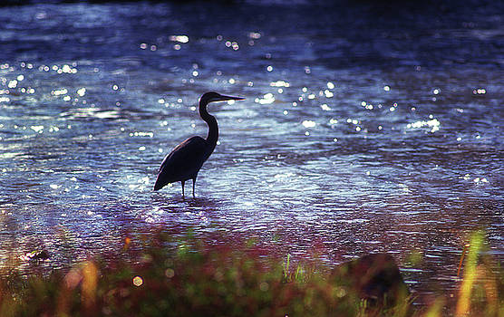 Blue Heron on the Holston by Earl Carter