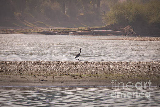 Blue Heron on the Yellowstone by Shevin Childers