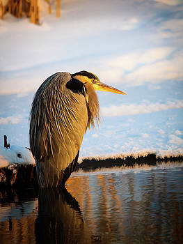Blue Heron resting by Bryan Carter