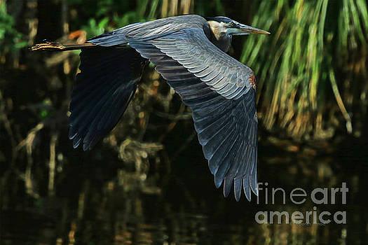 Blue Heron Series The Pond by Deborah Benoit
