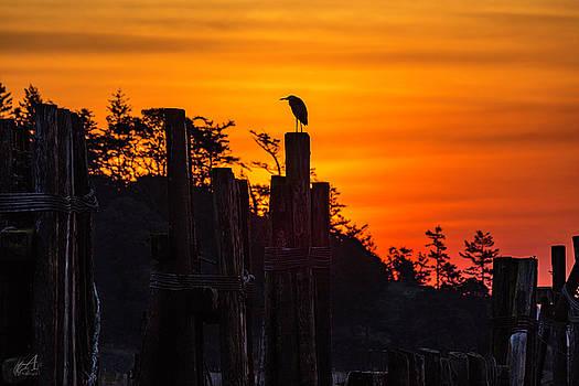 Blue Heron by Thomas Ashcraft