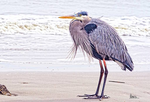 Blue Heron Watching by Virginia Bond