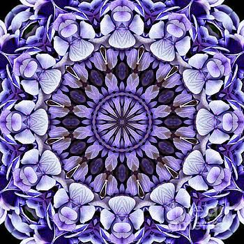 Blue Hydrangea Flower Petals Abstract by Smilin Eyes  Treasures