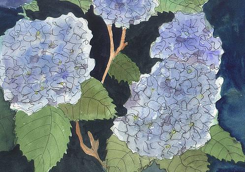 Blue Hydrangea by Jane Croteau