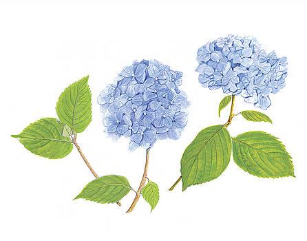 Blue Hydrangea by Linda Wolfe