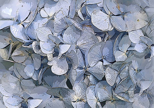 Blue Hydrangeas by Jacqi Elmslie
