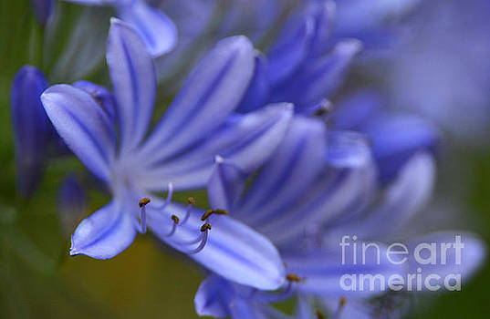 Blue In Bloom by Dan Holm