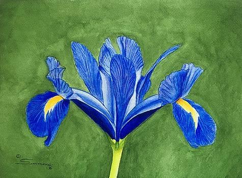 Blue Iris by C Wilton Simmons Jr