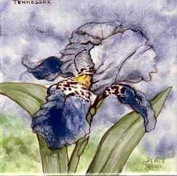 Blue Iris by Dy Witt