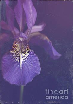 Blue Iris by Lyn Randle