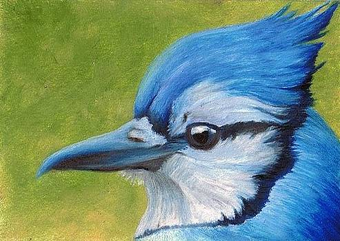 Blue Jay ATC by Brandon Sharp