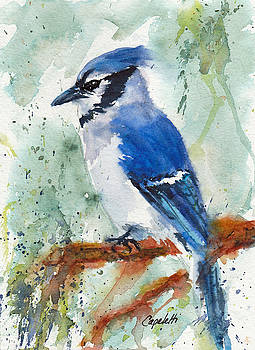 Blue jay by Barb Capeletti
