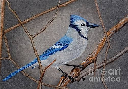 Blue Jay in Thicket by Sherry Goeben