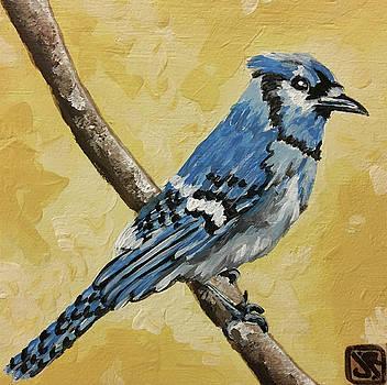Blue Jay by Julie K Ross