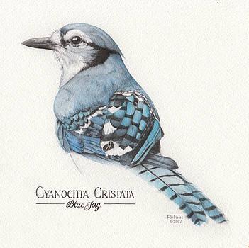 Blue Jay, Tinted by Rowena Finn