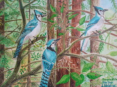 Blue Jays by Jorge Luis  Iniguez
