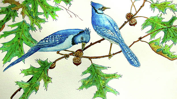 Blue Jays by Norma Boeckler