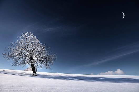 Blue Like Snow by Philippe Sainte-Laudy