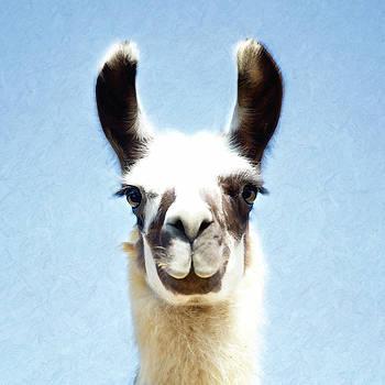 Blue Llama by Sue Collura