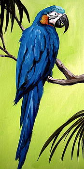 Blue Macaw - Parrot bird by Debbie Criswell