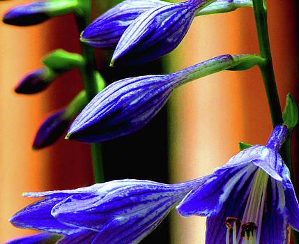 Blue Majesty by Art By ONYX