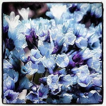 Blue Melancholia. #flowerart by Jim James