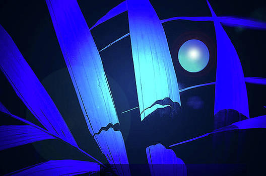 Rochelle Berman - blue moon