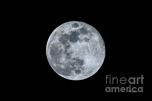 Blue Moonscape Photography 3644A by Ricardos Creations