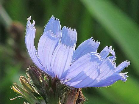 Blue Morning by Loretta Pokorny