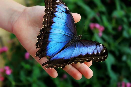 Blue Morph by Denise Irving