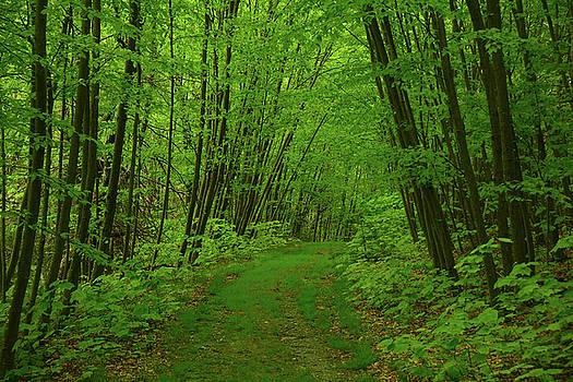 Blue Mountain Lakes Trail by Raymond Salani III