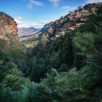 Blue Mountains Vista from Leura Cascades walking track by Daniela Constantinescu