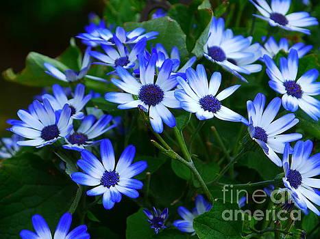 Blue by Nancie DeMellia