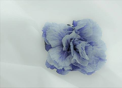 Blue On Blue by Lori Pessin Lafargue