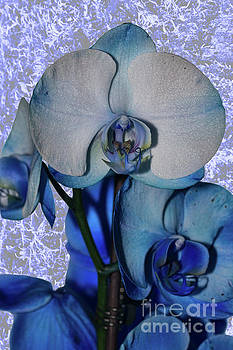 Steve Purnell -  Blue Orchid 3 Texture