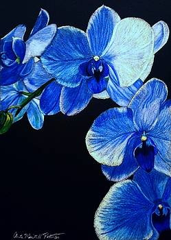 Blue Orchid - Electric-Blue Phalaenopsis by Anita Putman