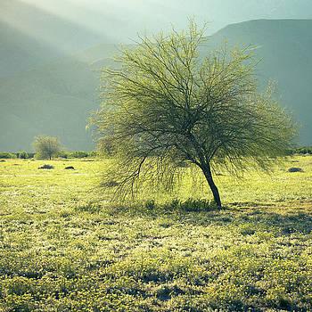 Blue Palo Verde by Alexander Kunz